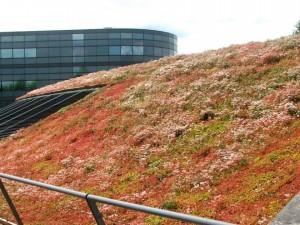Sedum_Green_Roof_3